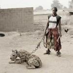 hyena3