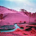 congo-rosa-01