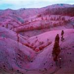 congo-rosa-03